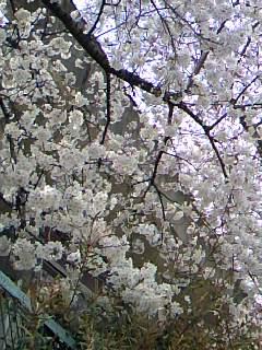 2009.3.31.jpg